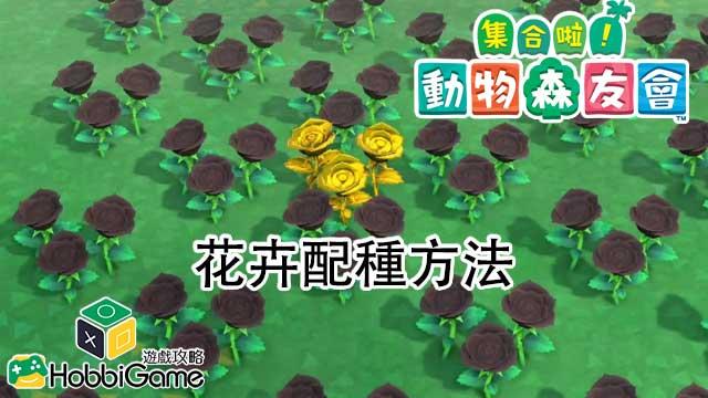 集合啦 動物森友會 花卉配種方法